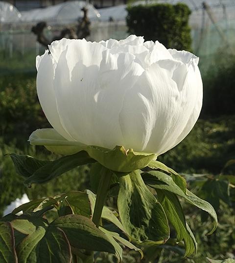 0505syakuy_1