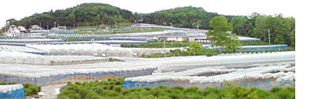 Toyonaga