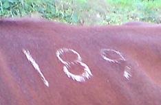 189ban