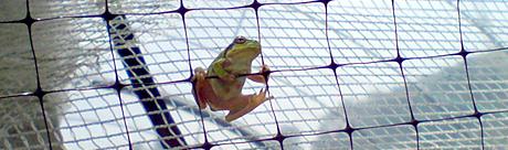 0505frog