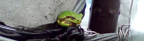 0506frog