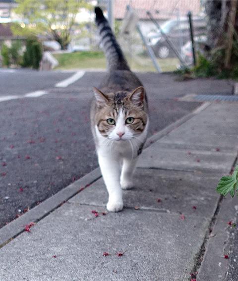 0423shima