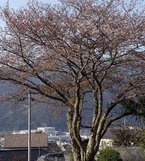 0328sakura