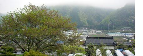 Hazaakura