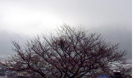 Sagiri_3